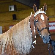 Minnesota Horse Expo